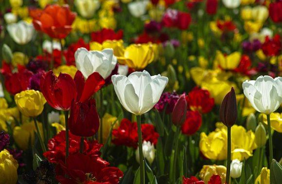 Floralies en Belgique