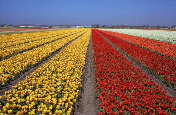Voyage aux pays des fleurs