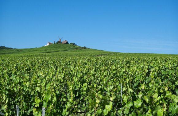 Sur la Route du Champagne