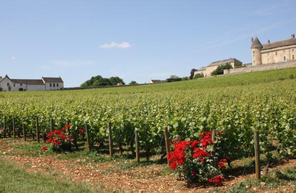 Generous Burgundy