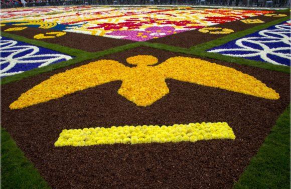 Un tapis de fleurs envahit Bruxelles